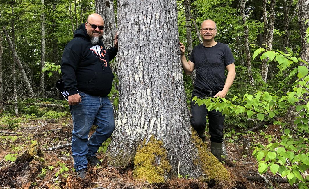 Gerry Sheena und Rolf Bouman bei der Baumbegutachtung