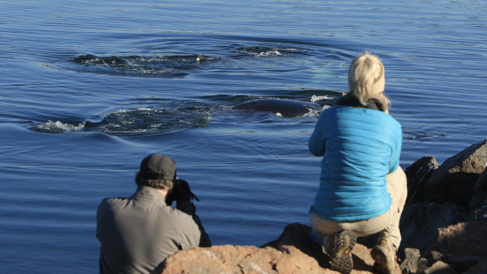 Wale beobachten in Nova Scotia / Kanada